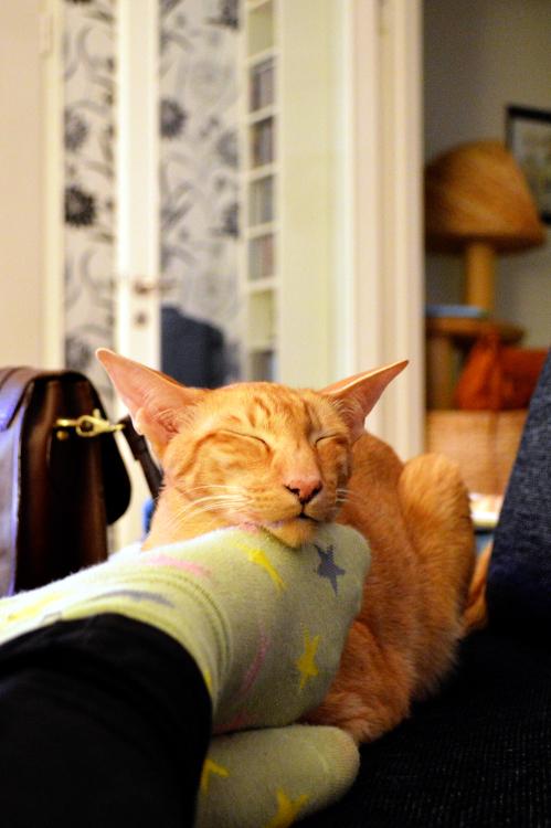 Comfy Jeera -- 2 Women 2 Cats