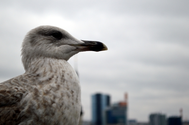 Rasmus the friendly seagull thinking about the purpose of life