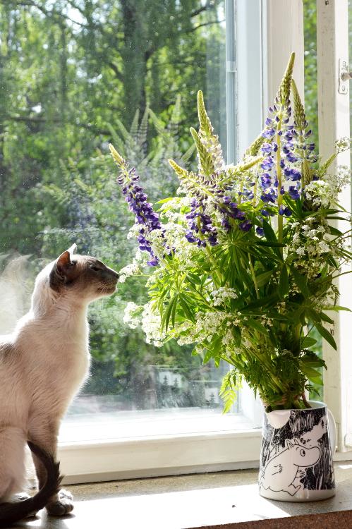 2 women 2 cats -- Kookos and Flowers